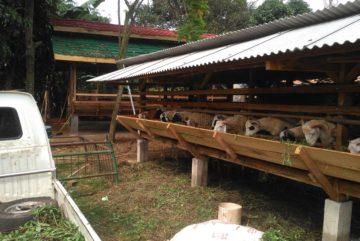 Harga kambing qurban 2018 di Lengkong Wetan Tangsel hubungi 0895-2186-8651