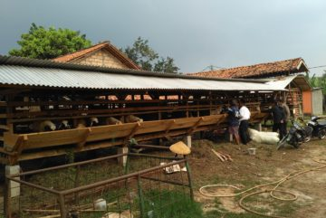 Qurban 2018 di Margajaya Bogor hubungi 0895-2186-8651