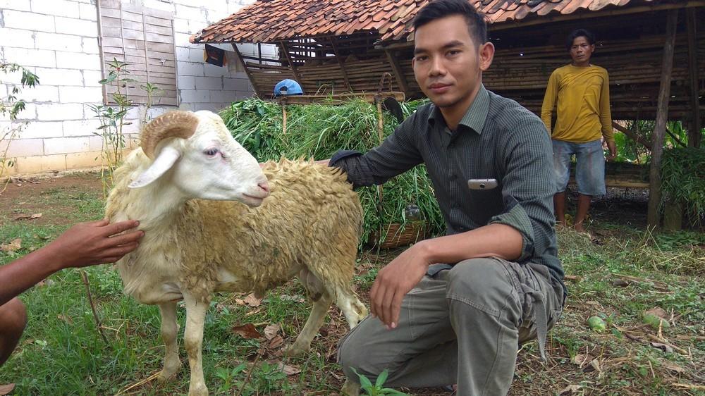 Jual hewan qurban di Parung Panjang Bogor hubungi 0895-2186-8651