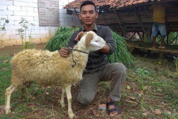 Harga hewan kurban di Kedungwaringin Bogor hubungi 0895-2186-8651