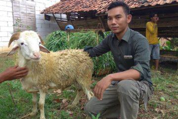 Jual beli kambing online murah berkualitas di GrogolDepok hubungi 0895-2186-8651