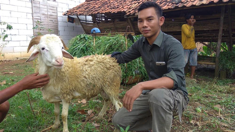 Cari harga kambing murah siap kirim di Kebayoran Lama Selatan Jakarta hubungi 0895-2186-8651