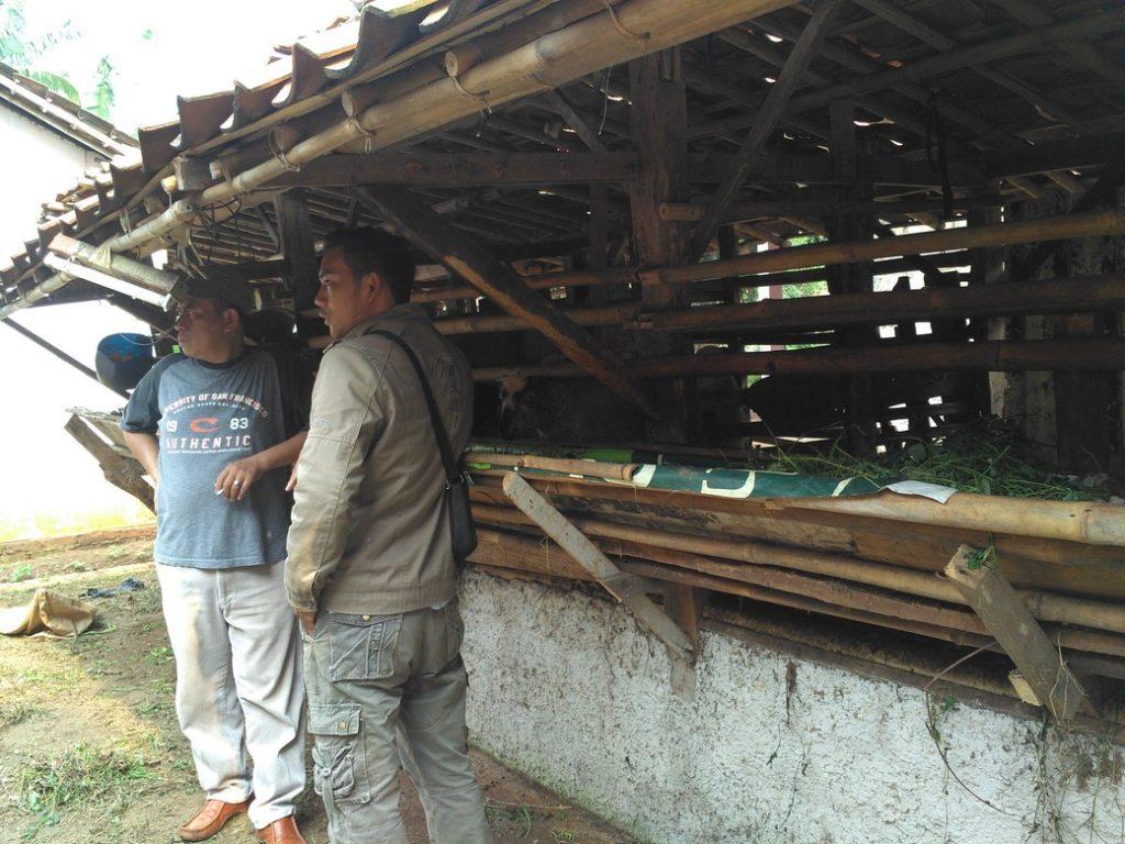 Peternakan kambing domba murah siap kirim di Kebayoran Lama Jakarta hubungi 0895-2186-8651