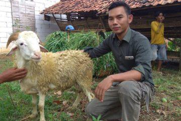 Harga kambing untuk aqiqah murah bergaransi di Mampang Prapatan Jakarta hubungi 0895-2186-8651