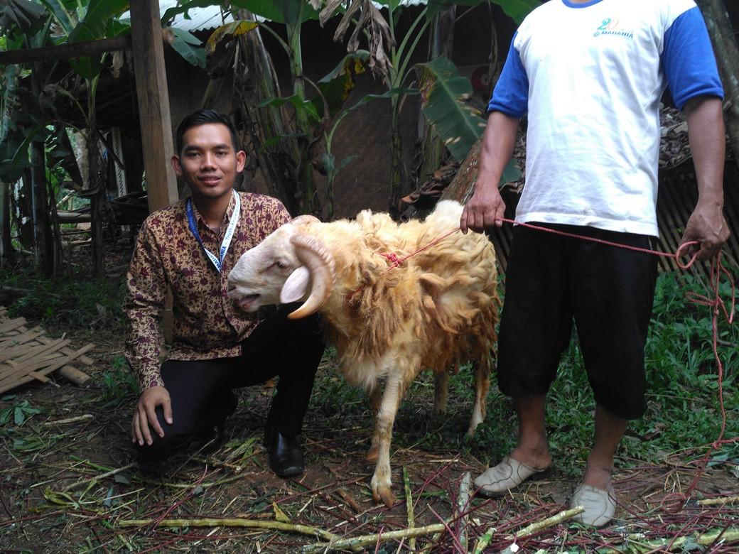 Jual hewan qurban murah berkualitas bergaransi di Rangkapanjaya Depok hubungi 0895-2186-8651