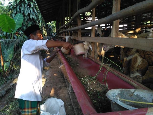 Jual beli kambing murah berkualitas bergaransi kirim ke Pancoran Mas Depok hubungi 0895-2186-8651