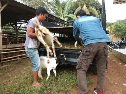 kambing kurban kirim ke Cihoe Bogor