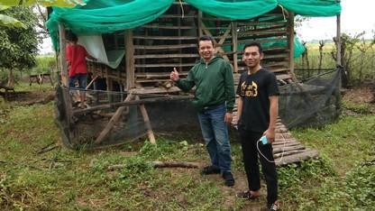 Jual kambing Jakarta murah siap antar 3