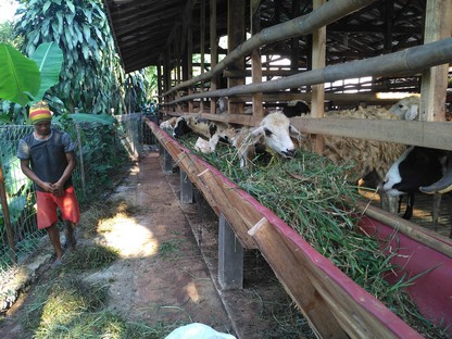 Jual kambing di Bekasi siap antar