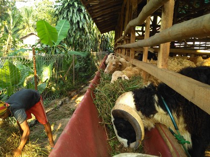 Penjual kambing aqiqah Jakarta Utara 1