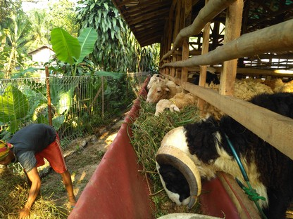 Jual kambing di Depok murah terjamin 1